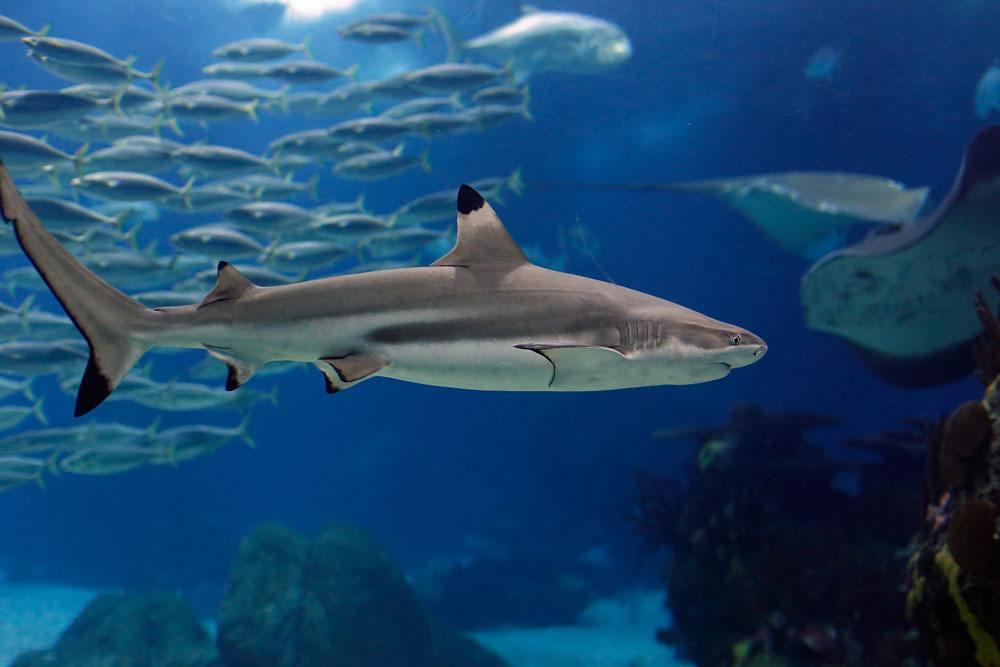 海鲨水族怎样打造海缸